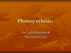 4.3 The Light Reactions