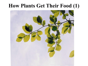 How Plants Get Their Food (1)