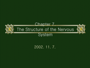 Chapter 7. The Structure of the Nervous System
