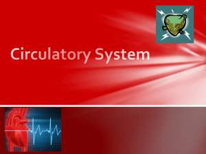 Circulatory System_Modified for website
