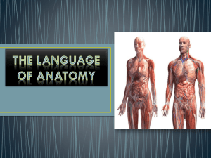Body Orientation and Language of Anatomy