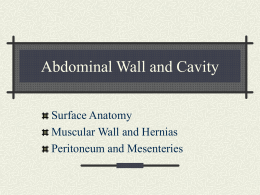 Abdominal Wall and Cavity
