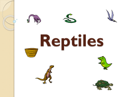 Reptile Notes