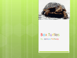 Box Turtles