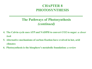 4. The Calvin cycle uses ATP and NADPH to convert CO 2 to sugar