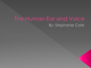 The Human Ear and Voice PHSY 256 Stephanie Cate