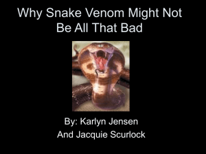 Why Snake Venom Might Not Be All That Bad