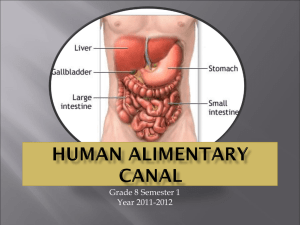 Biology_Human_Alimentary_Canal