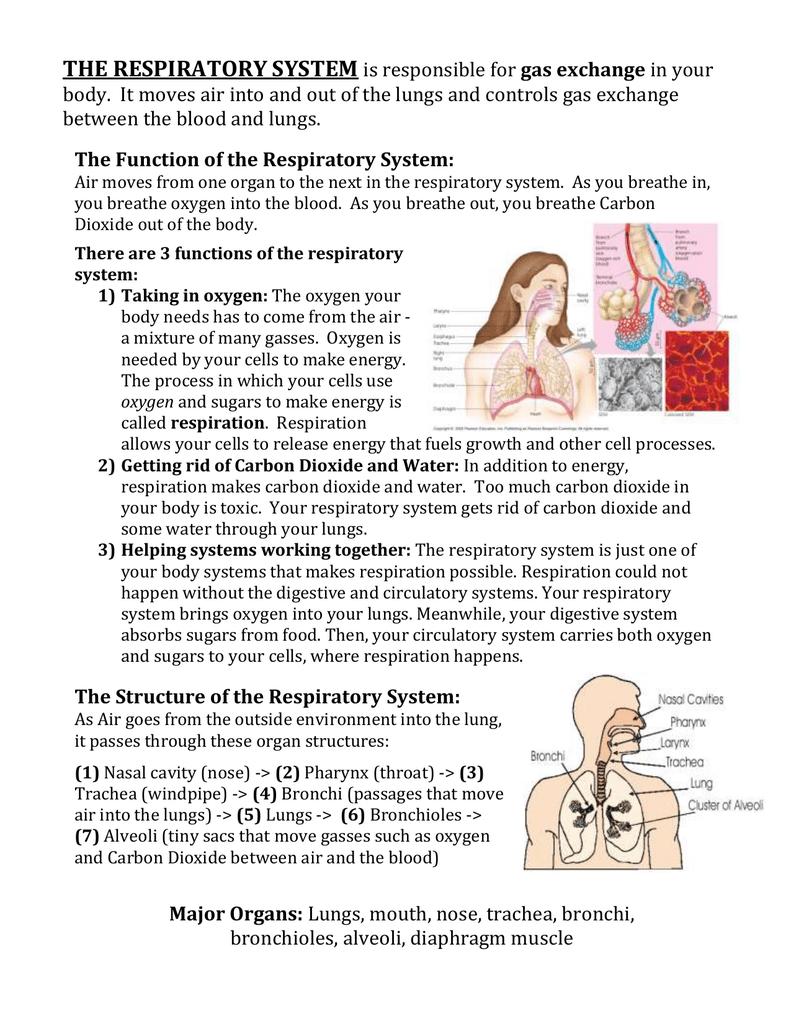 Großzügig Räder Zahn Anatomie Physiologie Und Okklusion Pdf ...