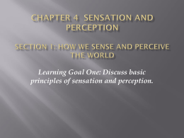 Chapter 4 Sensation and Perception Section 1: How we sense and