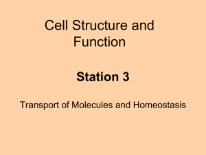 Station 3 - Transport of Molecules and Homeostasis