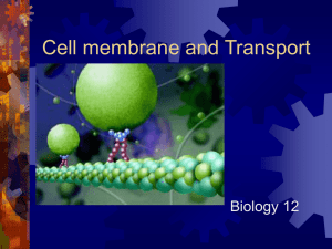 Cell membrane and Transport
