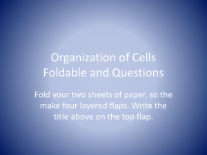 Organization of Cells Foldable and Questions