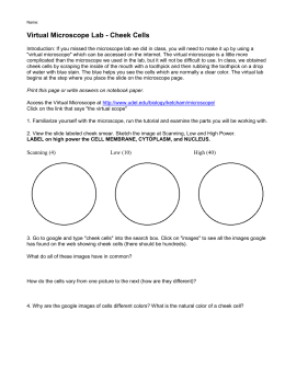 Printables Microscope Lab Worksheet virtual microscope lab worksheet intrepidpath cheek cells