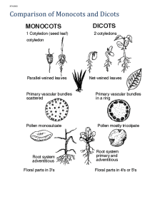 Comparison of Monocots and Dicots Characteristic Monocots Dicots