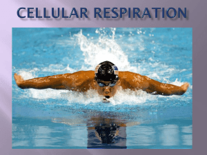 Chapter 9 - Cellular Respiration