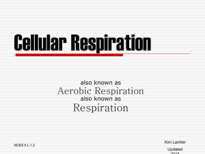 Cellular Respiration also known as Aerobic Respiration also known