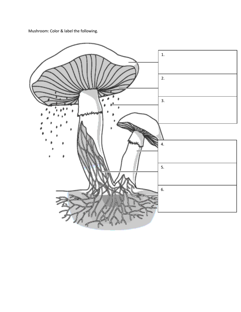 fungi coloring worksheet the best and most comprehensive worksheets. Black Bedroom Furniture Sets. Home Design Ideas