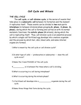 Printables Cell Cycle And Mitosis Worksheet cell cycle mitosis the mitosis