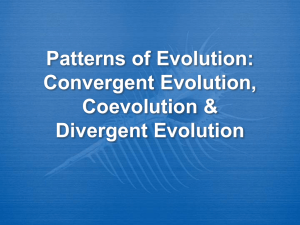 Patterns of Evolution: Convergent Evolution vs