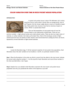 color variaton over time in rock pocket mouse population