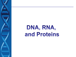 essay on dna and rna Dna and rna the sugar found in dna is deoxyribose which lacks one oxygen the sugar found in rna is ribose rna molecules can have a much greater variety.