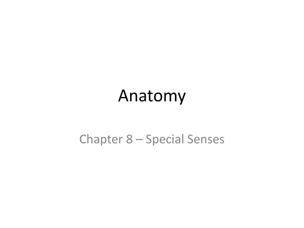 Anatomy - Images