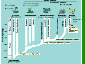ppt-Plant Classification & Structure