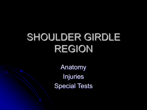 shoulder girdle region