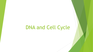 DNA and Cell Cycle