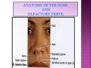 Lecture 15 - Anatomy of the Nose