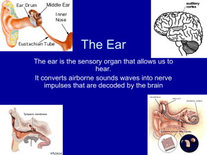 2) The middle ear