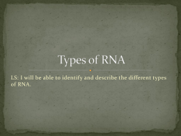 Types of RNA ppt