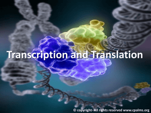 transcription and translation presentation