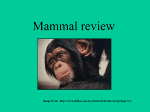 Mammal review - local.brookings.k12.sd.us
