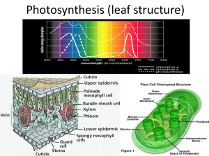 Photosynthesis (leaf structure and chloroplast structure)