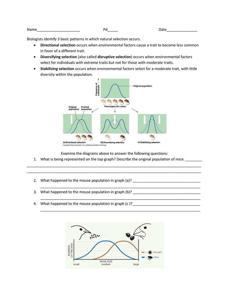 Selection Worksheet 3