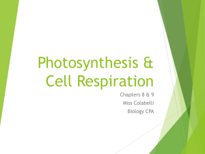 Photosynthesis & Cell Respiration PPT