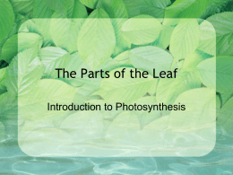 The parts of the leaf power point