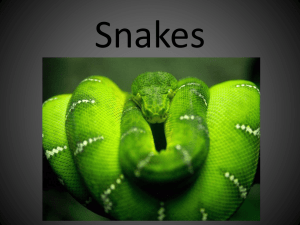 Snakes - Images
