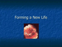 Forming a new Life - St. Edwards University