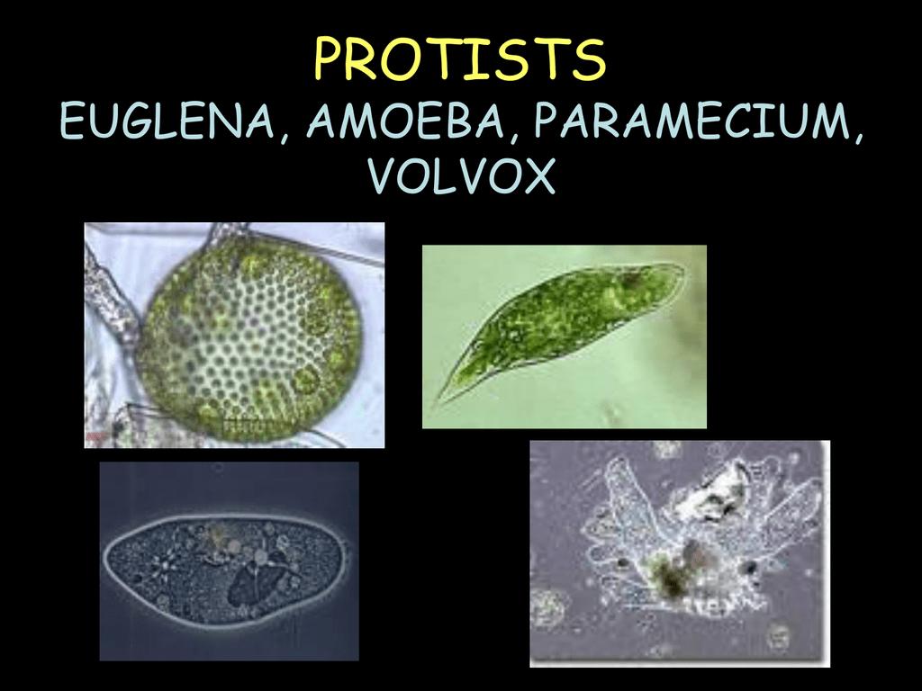 a férgek megelőzése emberben gyógyszer amur paraziták