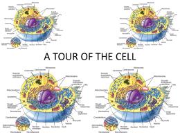 print › uil biology cells | quizlet | quizlet, Muscles