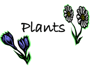 Plants PowerPoint Notes