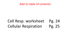 Cell Resp. worksheet Pg. 24 Cellular Respiration Pg. 25