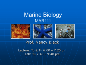 Marine Biology MB20