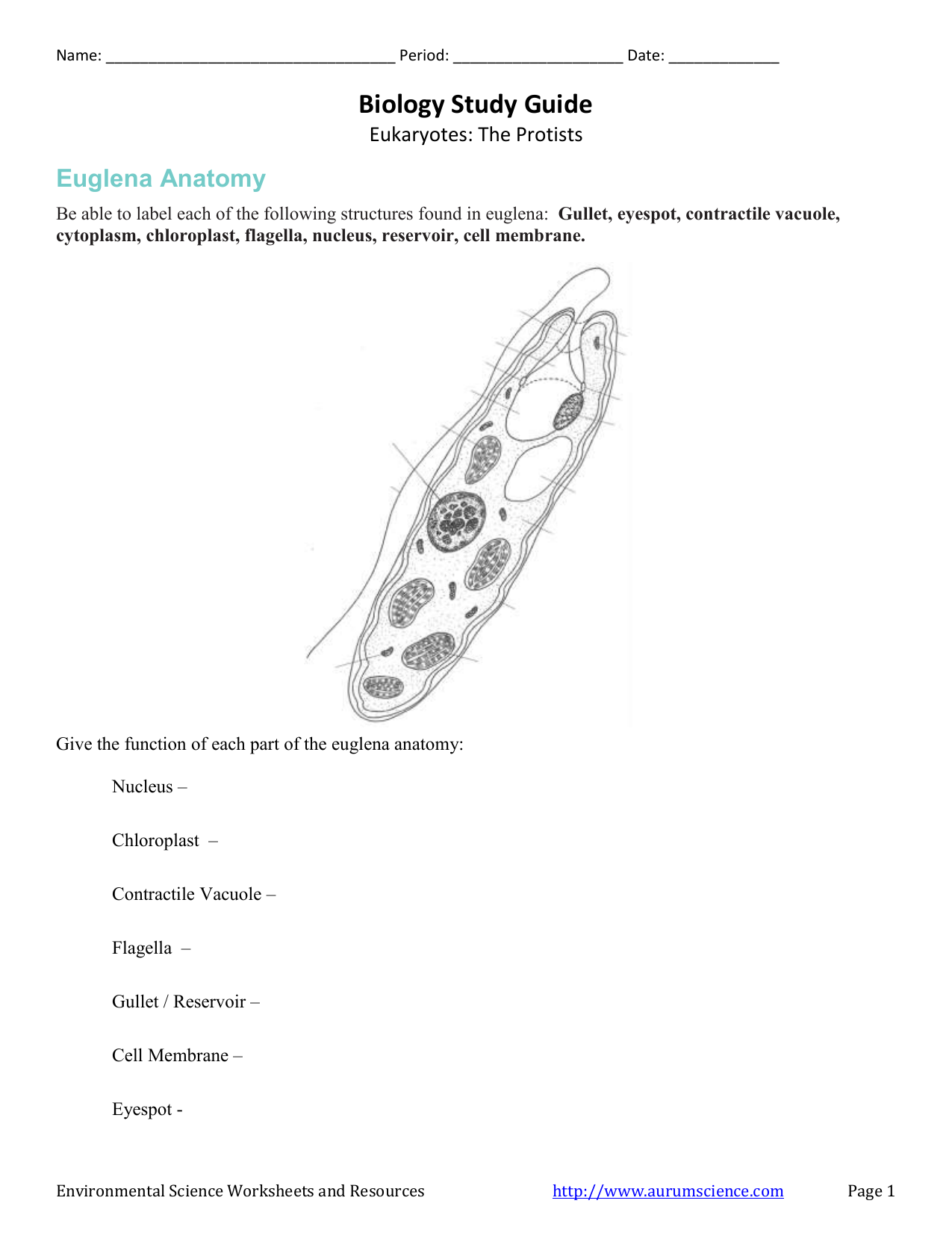 Biology Study Guide