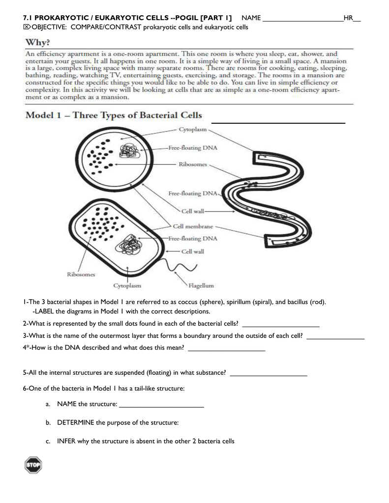 Worksheets Prokaryotic And Eukaryotic Cells Worksheet model 3 structural comparisons