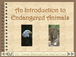An Introduction to Endangered Animals