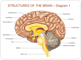 Ap psychology 3 b b older brain structures structures of the brain notes chapter 3 ccuart Choice Image